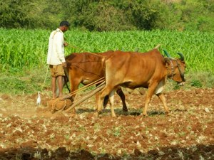 TraditionalFarming