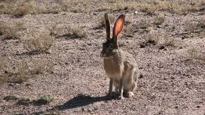 Eostre's hare